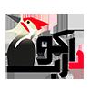 شرکت طراحی سایت دارکوب